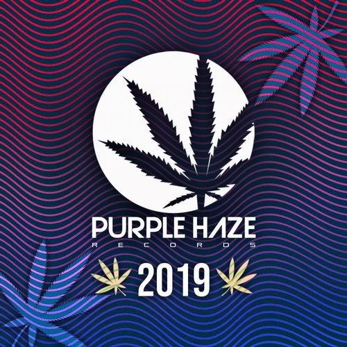Purple Haze 2019