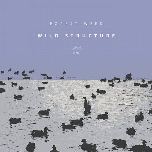 Wild Structure