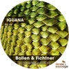 Iguana (Soren Aalberg Remix)