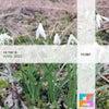 Mishaa (Max Freegrant & Slow Fish Remix)