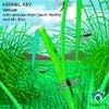Vetiver (Gavin Herlihy Remix)
