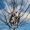 The Poison Tree (David Lynch Remix)
