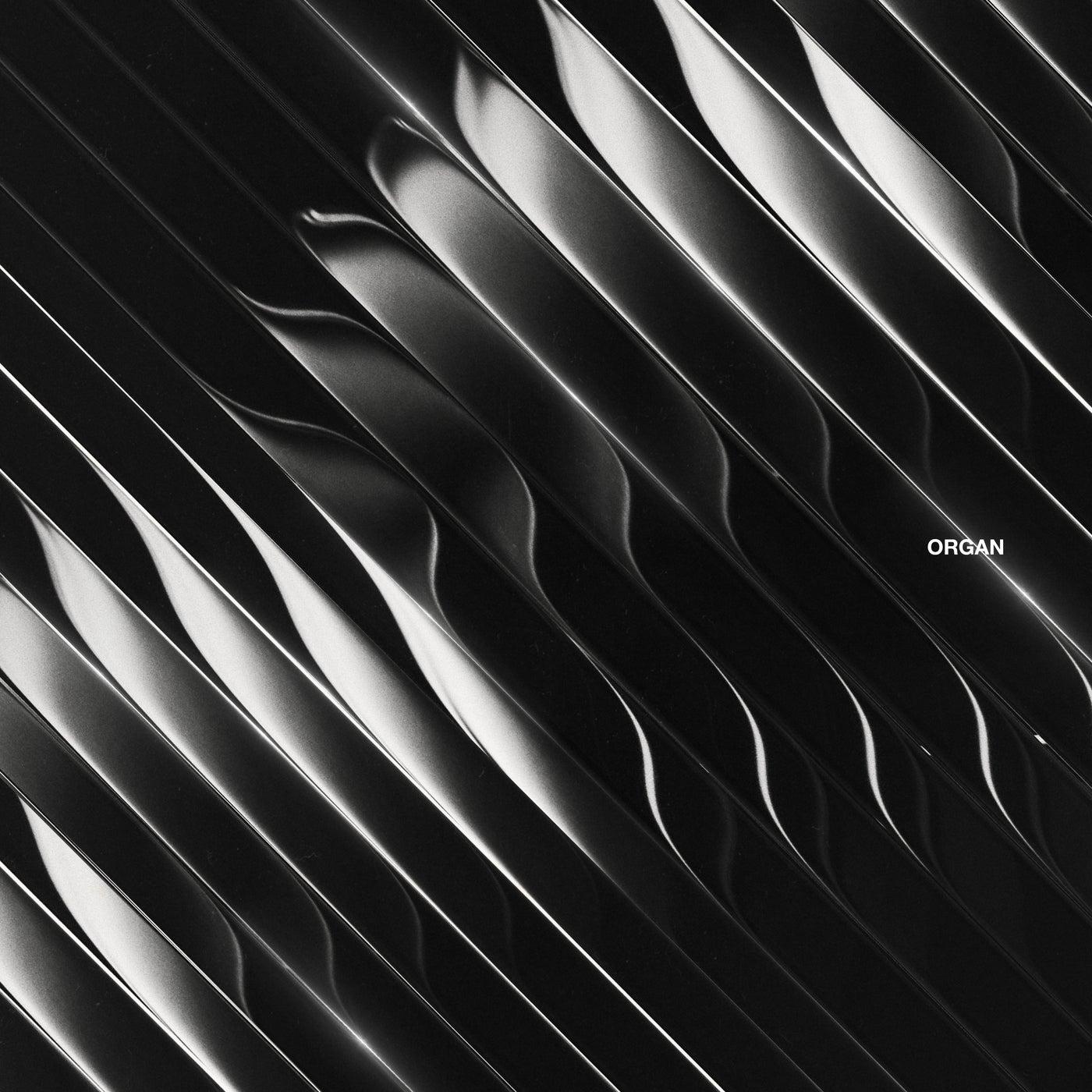 Sensory Division (Original Mix)