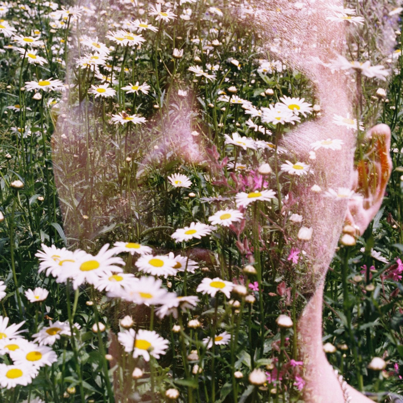 whiteflower (Original Mix)