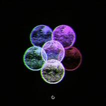 Carlos Pires - Circles