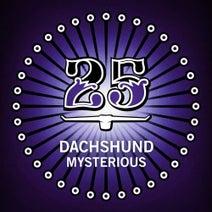 Dachshund, Dilby - Mysterious