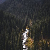 Cuki - Paths