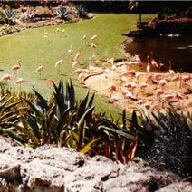 Imaginary Softwoods - Gold Fiction Loop Garden