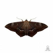 Monoteck - Moth
