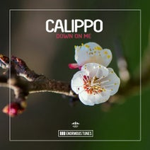 Calippo - Down on Me