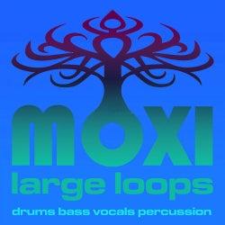 Vortex Loopy Loops Volume 14
