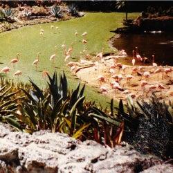 Gold Fiction Loop Garden