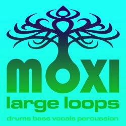 Vortex Loopy Loops Volume 13