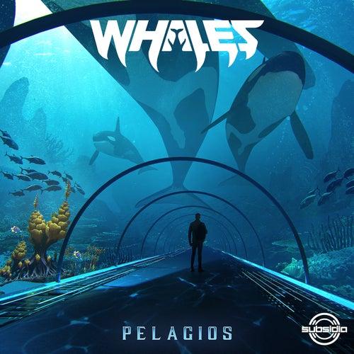 Download Whales - Pelagios (Album) (SUB155) mp3