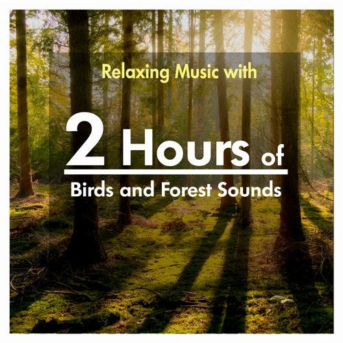 2 Hours of Relaxing Music with Birds and Forest Sounds from Relaxing